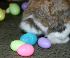 Easter-Bunny-laying-eggs