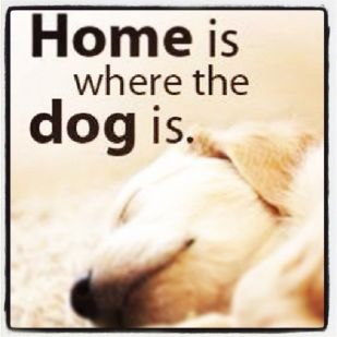 166525-Home-Is-Where-The-Dog-Is.jpg